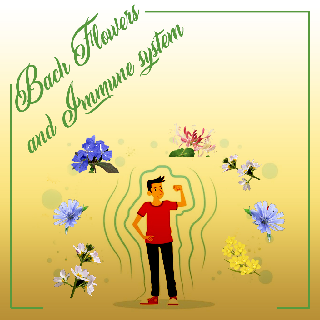 bach flower and immune system illustration